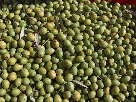 Minyak Zaitun Olio Dioliva khasiat buah zaitun dan minyak zaitun redzuan ridz
