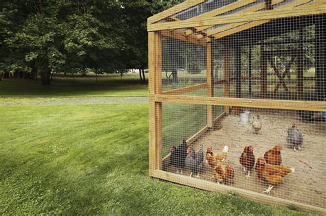how to legalize owning chickens in your community