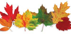 leaves changing color annies home fall offers beautiful colors but how