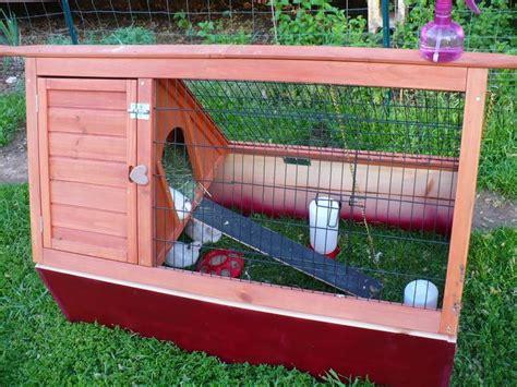 best 25 quail coop ideas on quail house