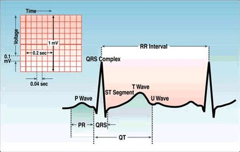 ecg tutorial online video ecg tutorial nursing helpful sites