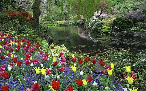 butchart gardens tulips   colors island vancouver