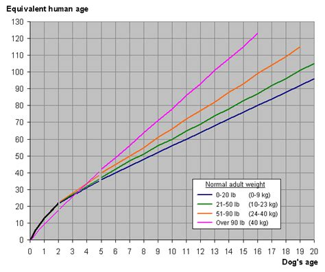 puppy years how to calculate years