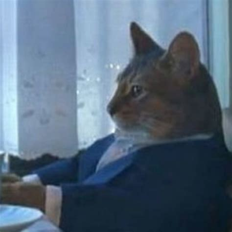 sophisticated cat i should buy a boat the funniest exles of the sophisticated cat meme from