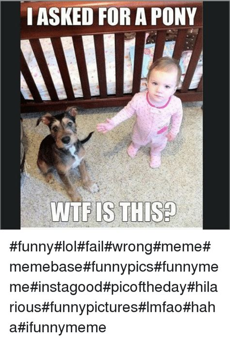 Memes And Funny Pics - i asked forapony wtf is this