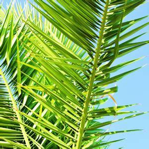 Winterharte Palmen Für Den Garten 3 by Winterharte Palmen F 252 R Den Garten Palmenarten Pflege