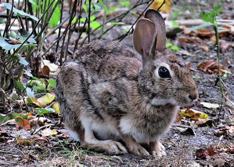 backyard rabbit jodi diliberto website