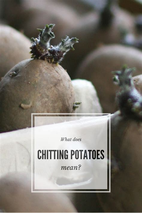 Potatoes Meaning by What Does Chitting Potatoes