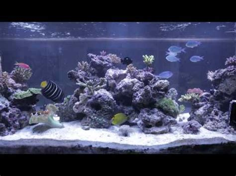 aquascaping live rock aquascaping tips doovi
