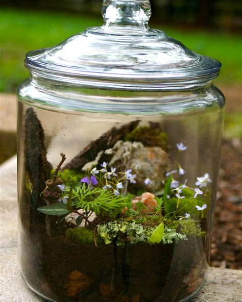get to know your backyard build a terrarium terraria gardens and plants