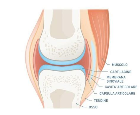 articolazione mobile combattere il dolore articolare in modo naturale e senza