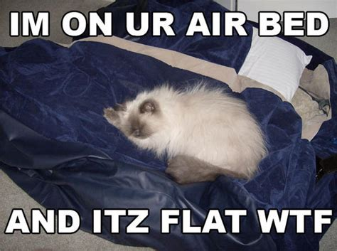 bed memes flat air bed meme cats