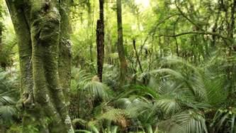Tropical Rainforest Plant Facts - rainforest facts plants nature eden channel