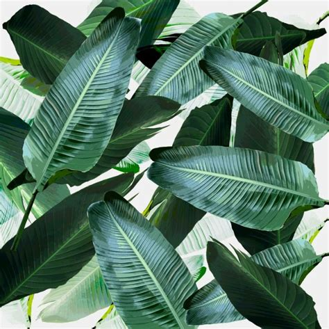 banana leaf template 17 best ideas about banana leaves on leaves