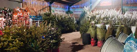 york christmas trees christmas starts here