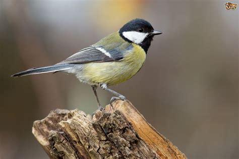 Garden Birds by Garden Birds Family Pets4homes