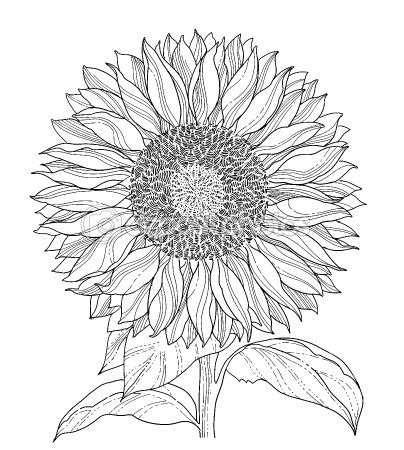 sunflower garden coloring page 251 best coloring pages flowers leaves gardening