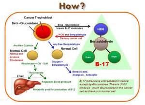 Vitamin b17 alternative natural cancer cures amp cancer