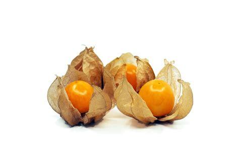 fruit or berry free photo kut berry fruit health orange free image