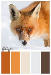 what color are foxes color scheme fox winter us
