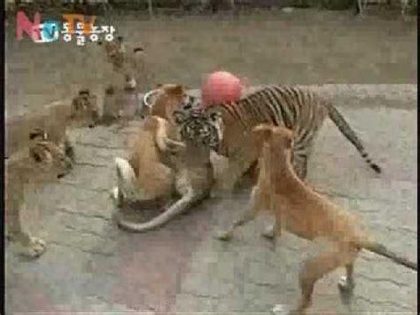 vs puppy vs beats up