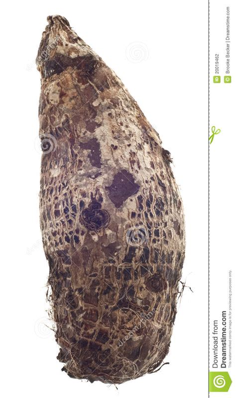 taro root yam vegetable stock photography image 20019462 - Is Yam A Root Vegetable