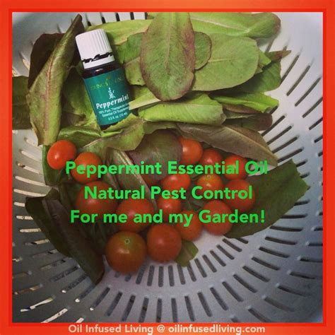 essential oils for garden pest 17 best images about essential oils cooking on