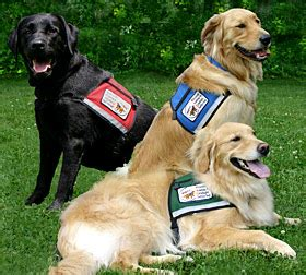 service dogs florida florida news archives home property management