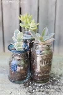Glass Vase Terrarium Succulents Mason Jars The Blissful Bee