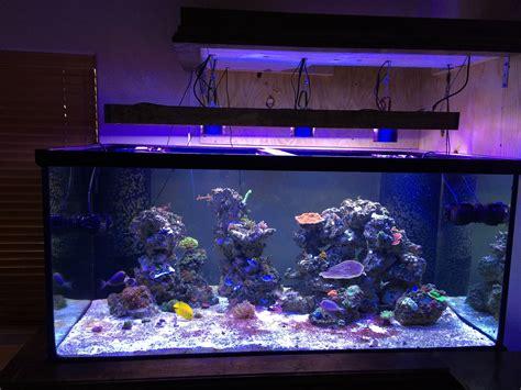 Dd Reef Paste 270 Gr 250 dd with fish room reef2reef saltwater and reef aquarium forum