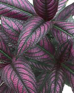 Silver Foliage Plants Australia - 301 moved permanently