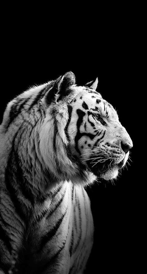wallpaper black tiger iphone siberian tiger black wallpaper iphone
