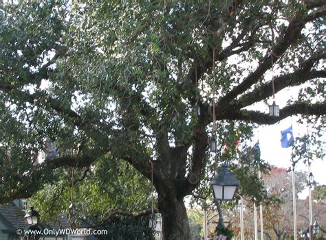 elm tree symbolism elm tree symbolism 100 elm tree symbolism moonstruck