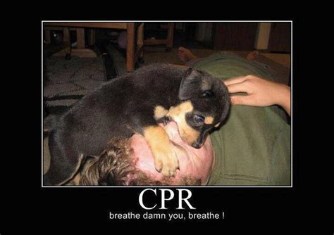 Cpr Dummy Meme - cpr dummy meme 28 images 25 best memes about cpr dummy