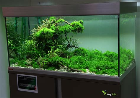 How To Aquascape A Planted Tank by The Of The Planted Aquarium 2015 4 Place