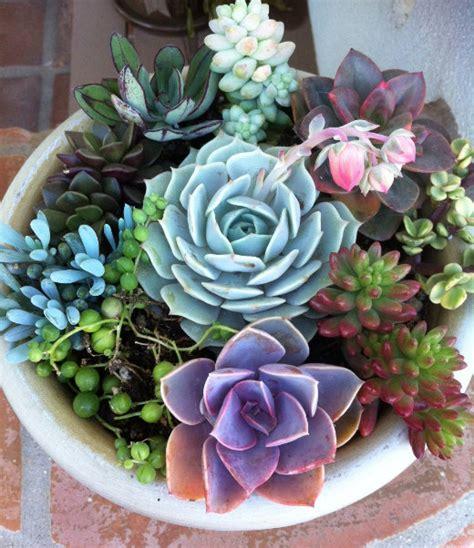 succulent plant diy dish garden plant set by succulentoasis