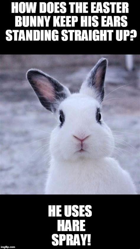 Easter Bunny Meme - rabbit imgflip