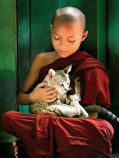 What Has A Monk Got To Do With Breast Enhancement by 1000 Images About Cats Dogs And Monks On