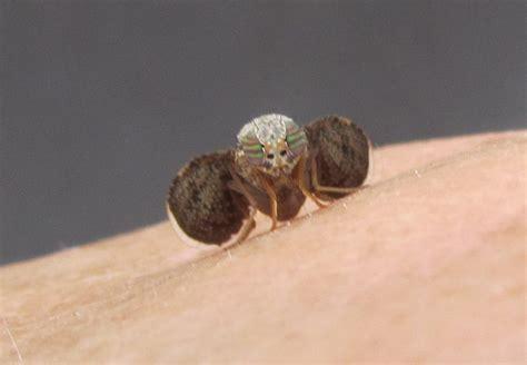 fruit flies in bedroom pictures fruit flies myideasbedroom com