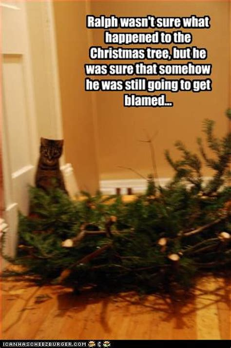 funny cats in christmas trees justacargal hump day humor lol catz