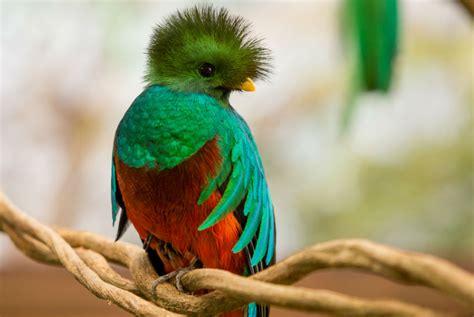 las aves exticas mi las 10 aves mas exoticas del mundo eslife