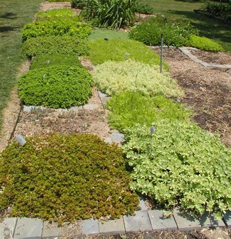 Winter Gardening In Texas - cover your ground with plants part 2 east texas gardening
