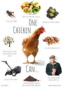 get more out of your chickens with less work nine