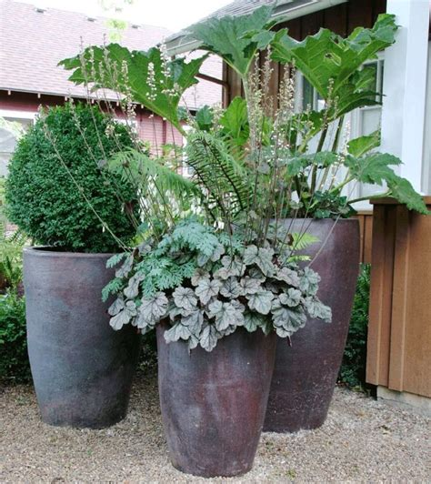 best 25 outdoor potted plants ideas on potted