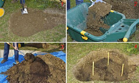 come piantare le in giardino piantare le fai da te in giardino