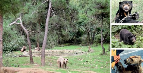 in search of sanctuary wildlife my books sanctuaries around the world the sanctuary