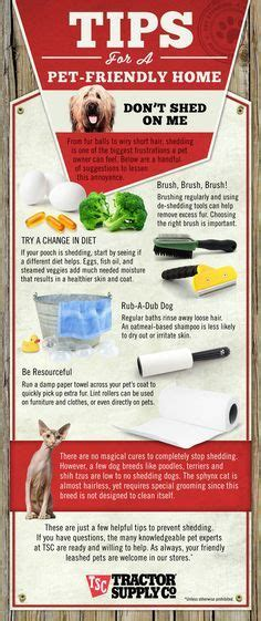25 best ideas about shedding remedies on