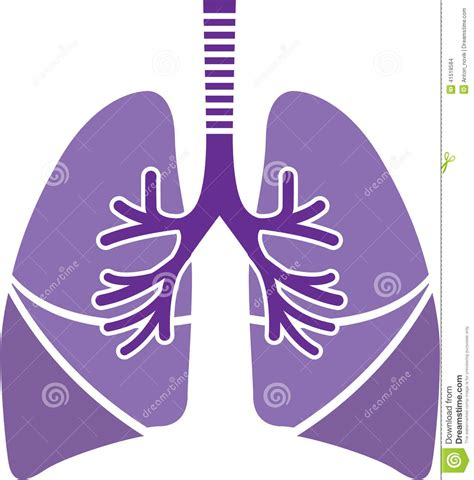 interior artistic stock vectors vector clip art healthy lungs stock vector image of illustration biology
