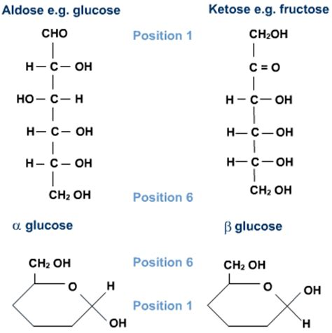 carbohydrates are what of molecules carbohydrates s cool the revision website