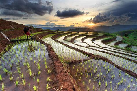 rice fields  terraced  chiang mai thailand stock